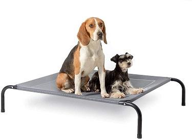 cama elástica para perro